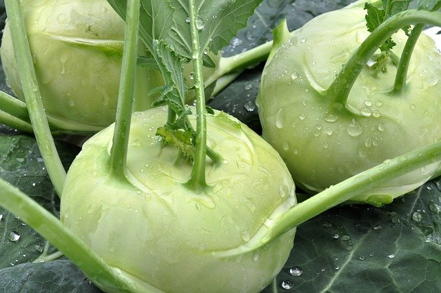 Cavolorapa Kohlrabi Vegetables  - lucas_holiday / Pixabay