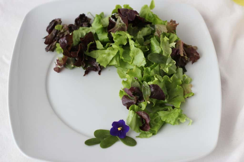 Salad Purslane Green Organic Fresh  - Veganamente / Pixabay